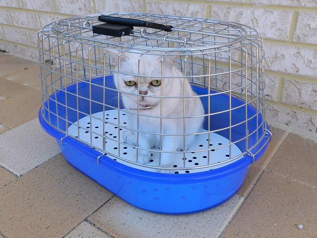kočka v přepravce.jpg