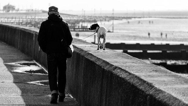 procházka se psem na pobřeží