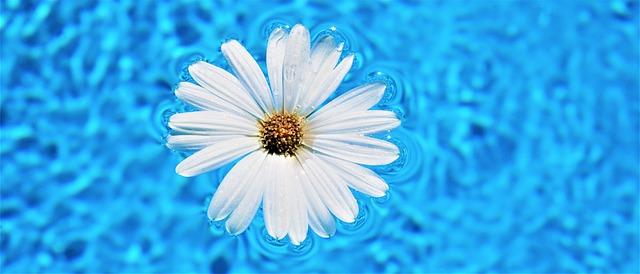 květ na hladině
